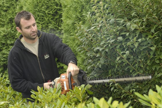 Shaping a Bellingham Hedge